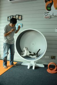 CatCafe04